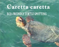 Zakynthos is the main breeding ground in the Mediterranean for the caretta caretta loggerhead sea turtle. While on holiday in Zante for an Energyia fitness activity holiday retreat you get the chance to view the turtles on an eco-friendly boat trip.